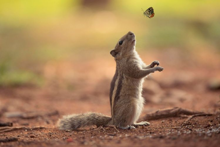 squirrel butterfly friendship chipmunk wallpaper