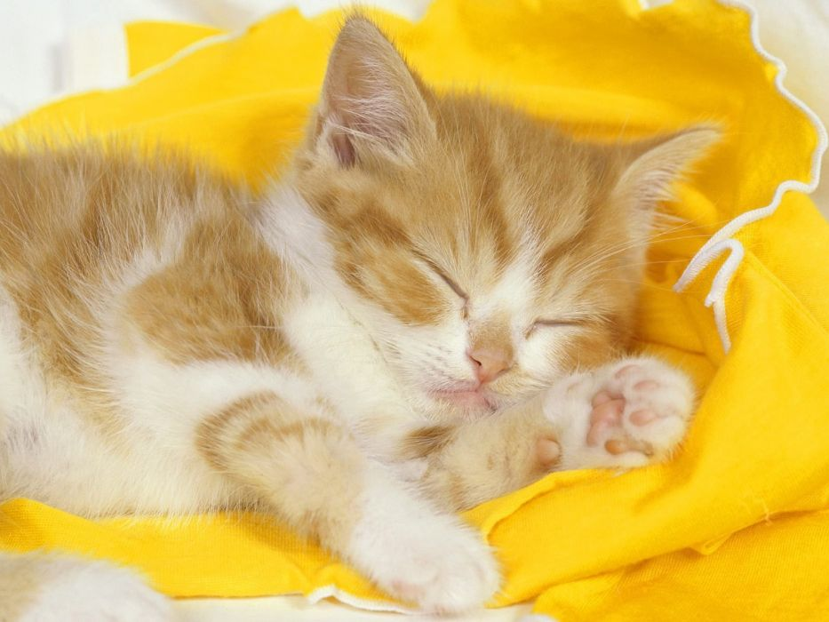 cat cats kitten baby wallpaper