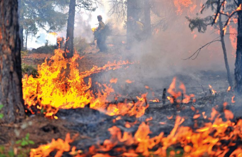 forest fire flames tree disaster smoke wallpaper
