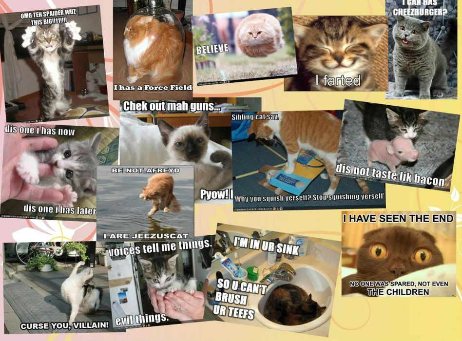 LOL CATS cat humor funny wallpaper