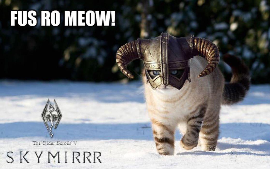 LOL CATS cat humor funny fantasy elder xcrolls wallpaper