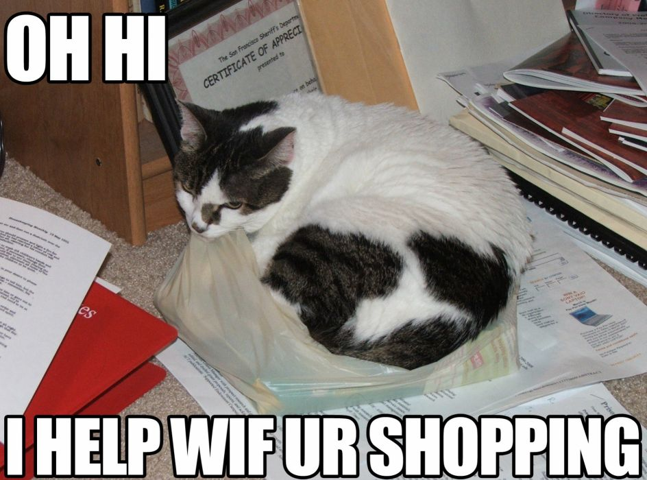 LOL CATS cat humor funny wallpaper