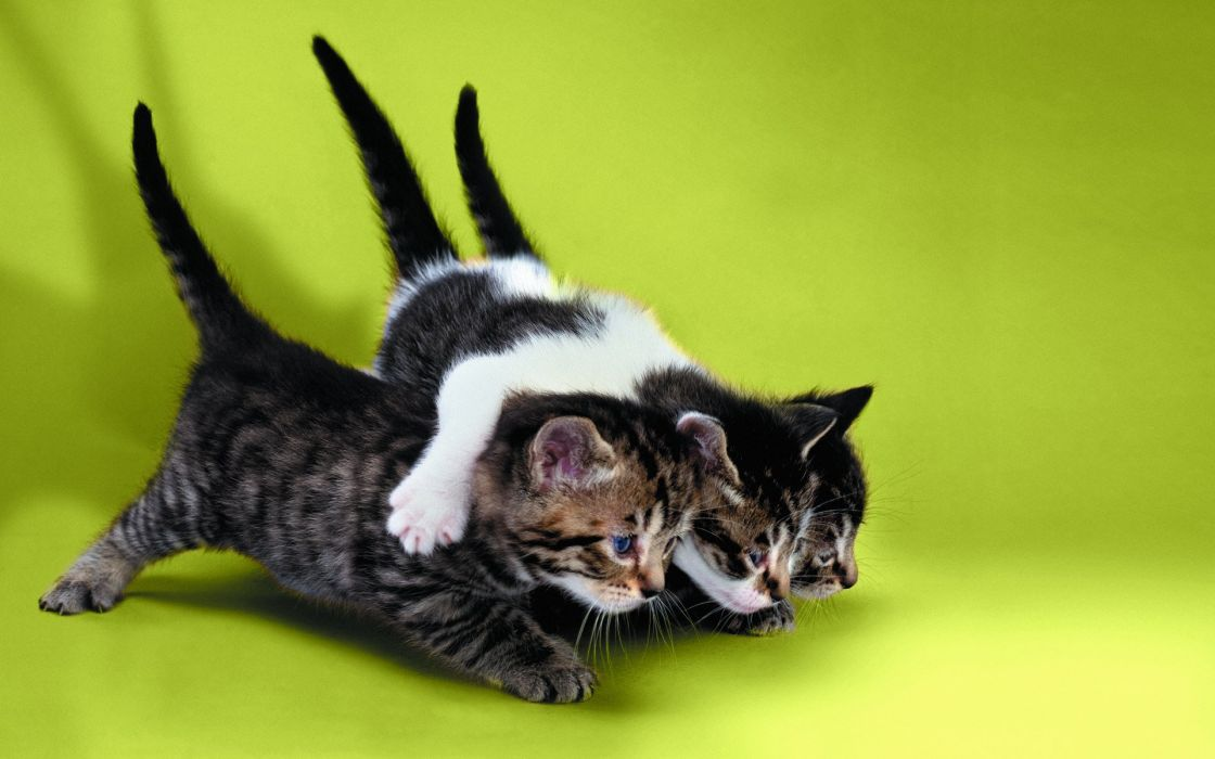 CATS cat kitten wallpaper
