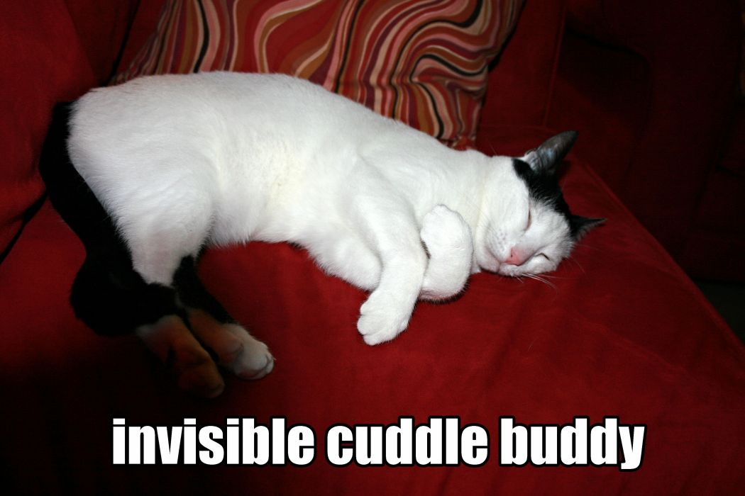 CATS cat humor funny lol wallpaper