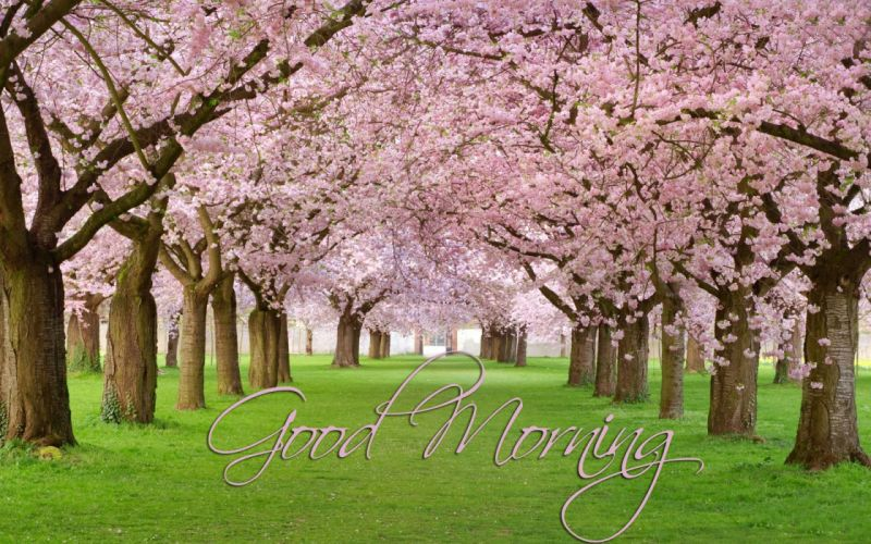 good morning greetings motivational mood wallpaper