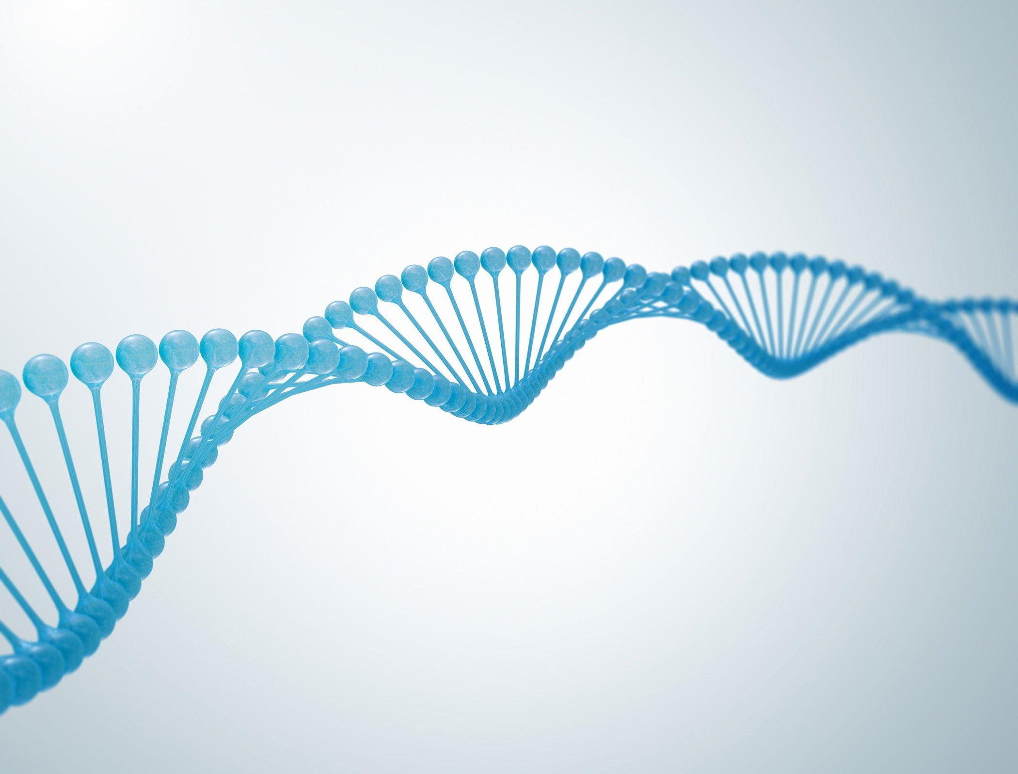Reconstruction phylogénétique :