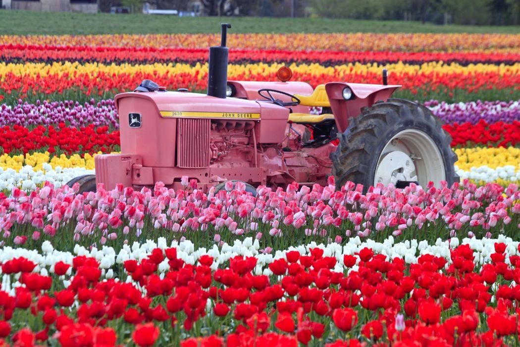 tulip fields tulips field flower flowers tractor wallpaper