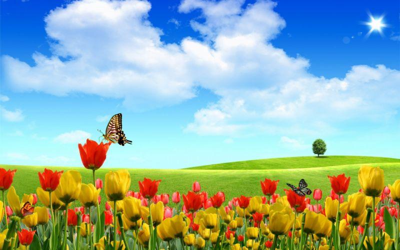tulip fields tulips field flower flowers butterly summer wallpaper