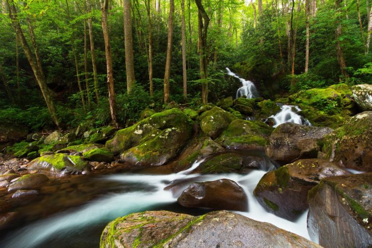 Great Smoky Mountains National Park forest river waterfall wallpaper