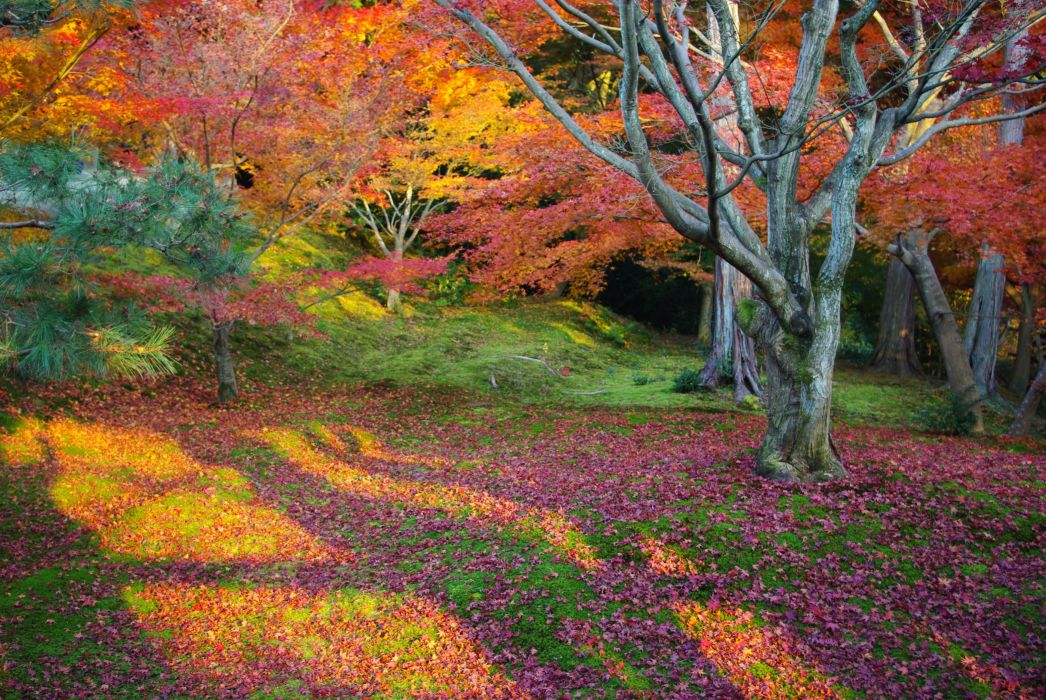 leaves trees forest japan tokyo autumn wallpaper