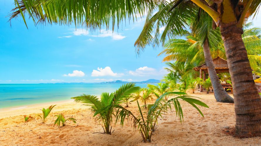 sand sea palm trees summer beach sun wallpaper
