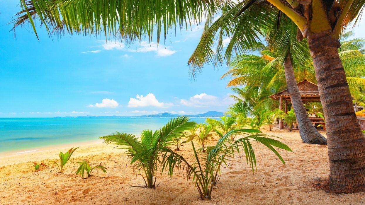 sand sea palm trees summer beach sun wallpaper