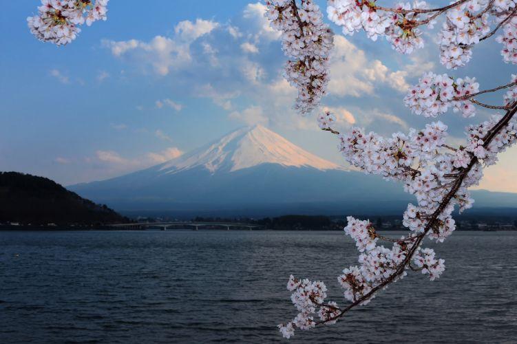 fuji sakura background forest tsvetenie volcano blossoms flowers sea ocean mountains wallpaper