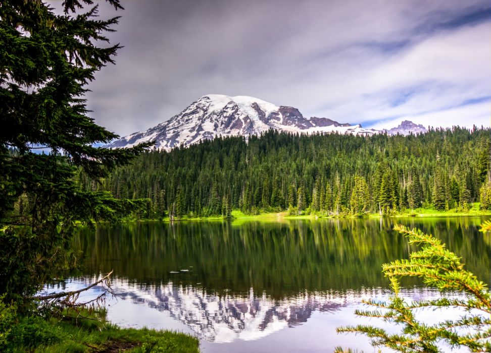 National Park Mount Rainier flowers mountains lake reflection volcano wallpaper