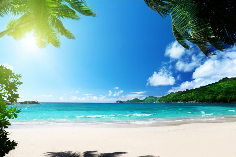 beach summer palms ocean tropical paradise sea sunshine wallpaper