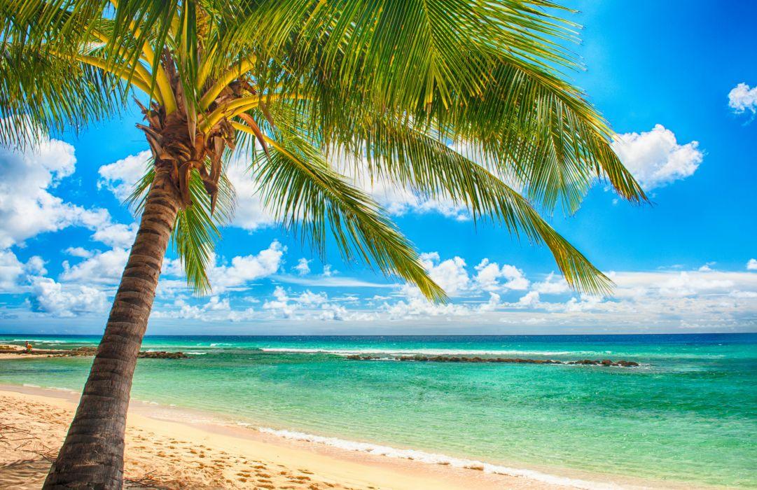 paradise sea summer ocean beach tropical palms sunshine wallpaper