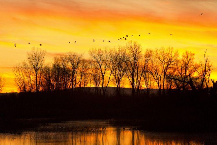california flock birds sunset sunrise color lake reflection wallpaper