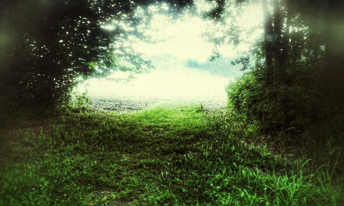 Misty Dream Field wallpaper