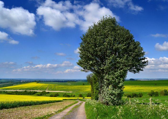 landscpae road field trees wallpaper