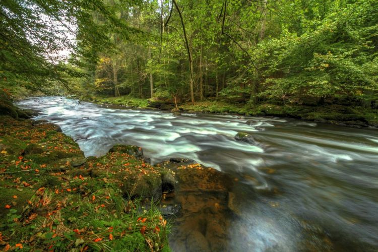 Germany Forest River Bavaria Nature wallpaper