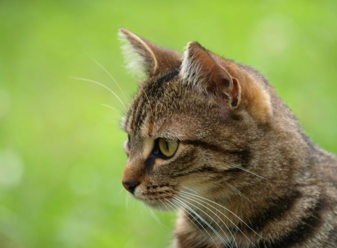cats cat wallpaper