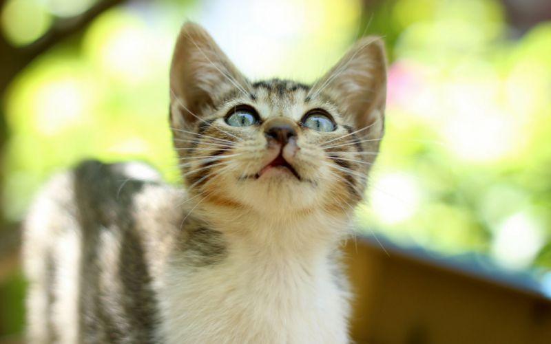 cats cat kitten kittens wallpaper