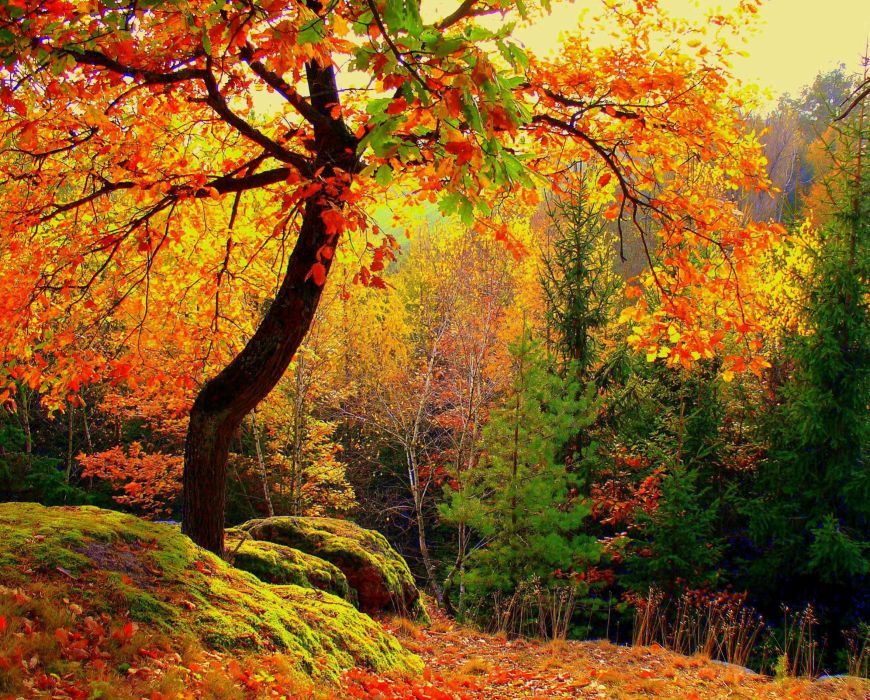 autumn trees forest nature wallpaper