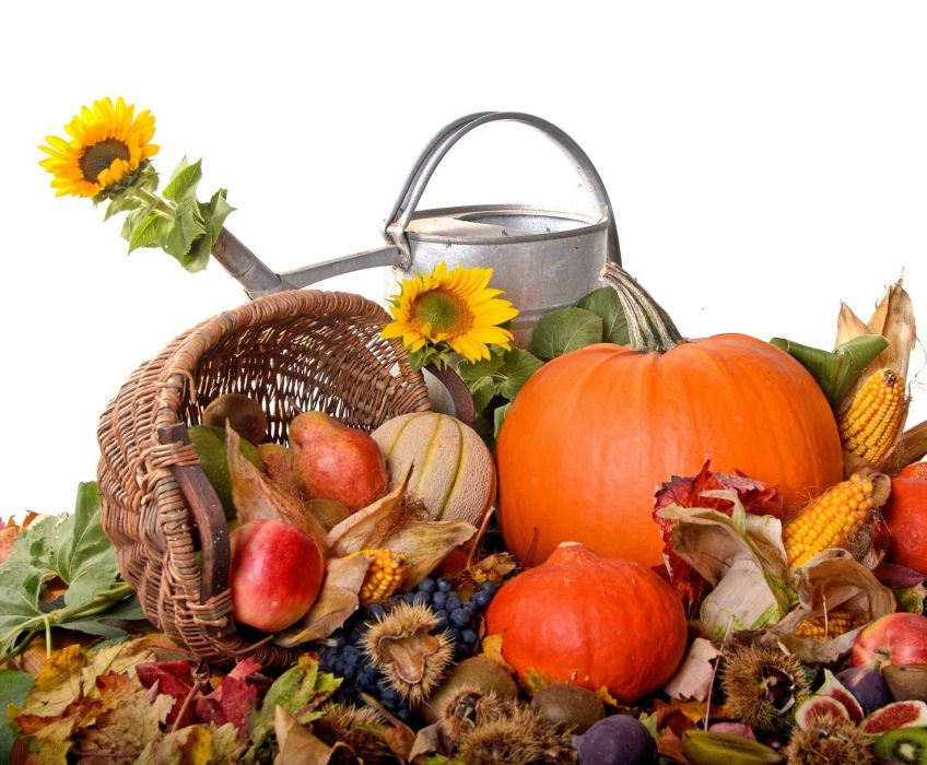autumn harvest food watering can sunflowers thanksgiving wallpaper