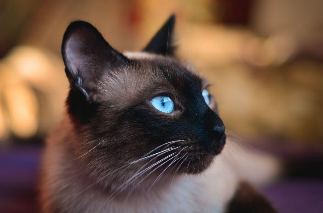 cat eyes blue wallpaper