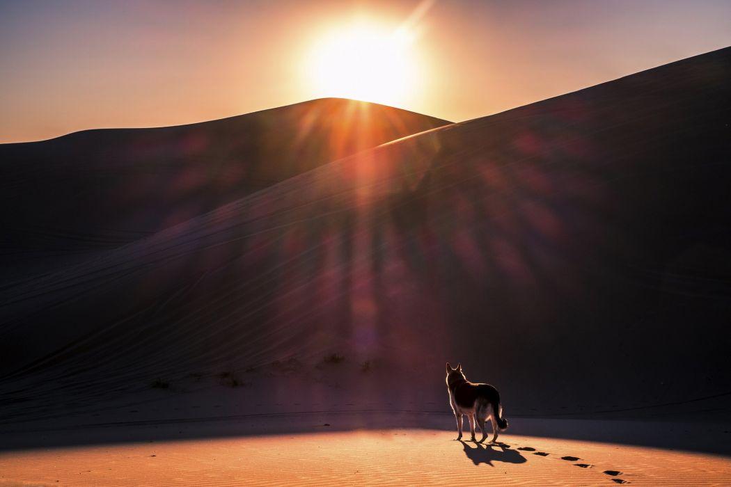 dog sun desert sand wolf wolves photoshop art artwork wallpaper