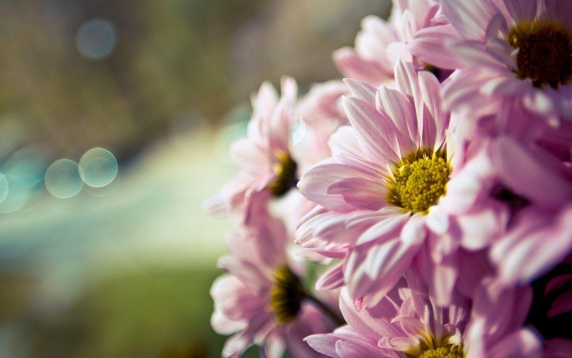 flower flowers macro bouquet bokek wallpaper
