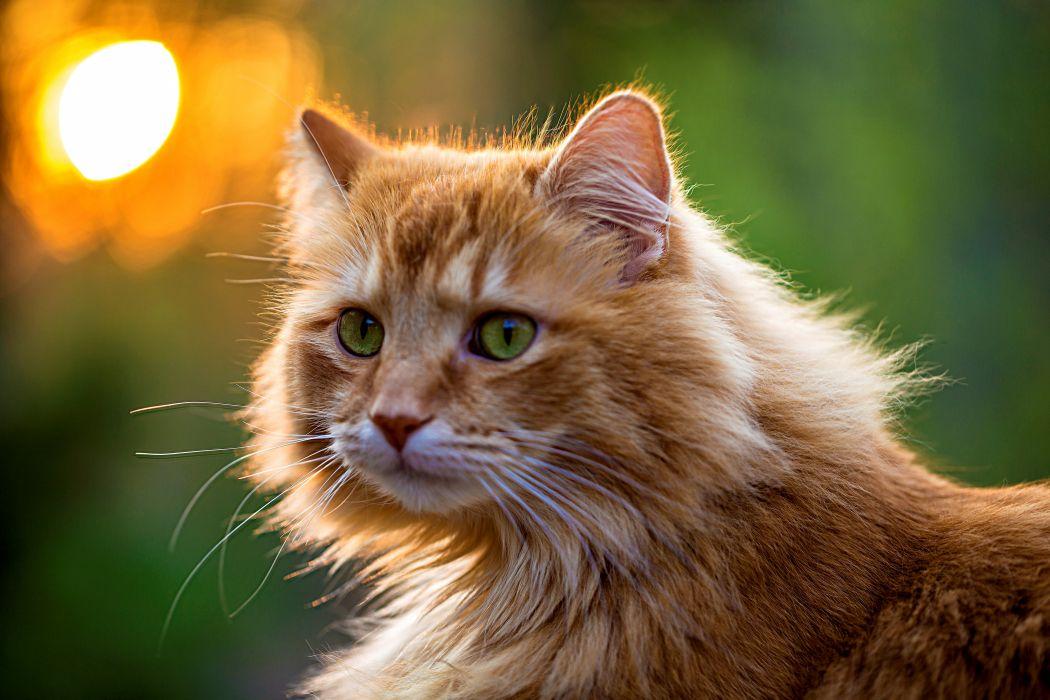 eyes green cat green wallpaper