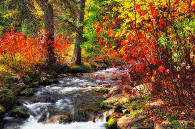 forest river trees autumn nature wallpaper