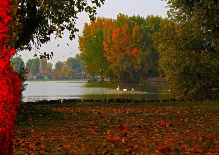 Lake Italy Lombardy Mantua nature autumn foliage photo wallpaper