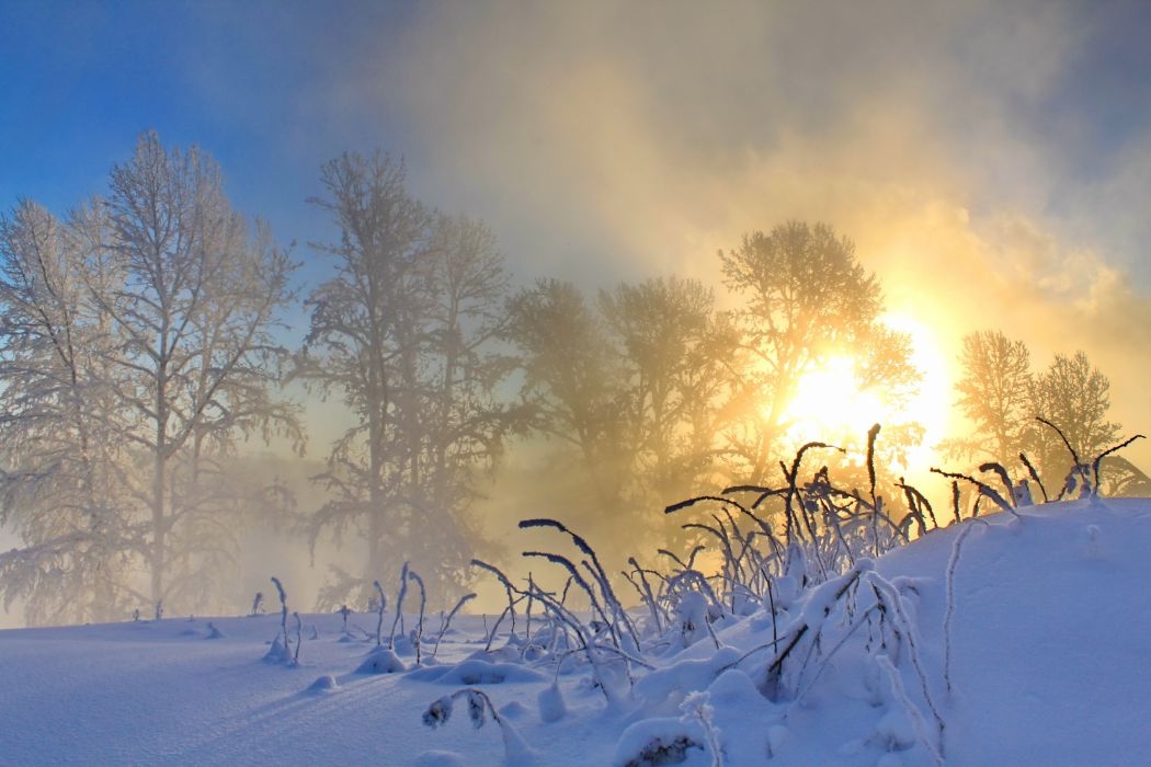 Forest Nature trees snow winter sun hone wallpapers for