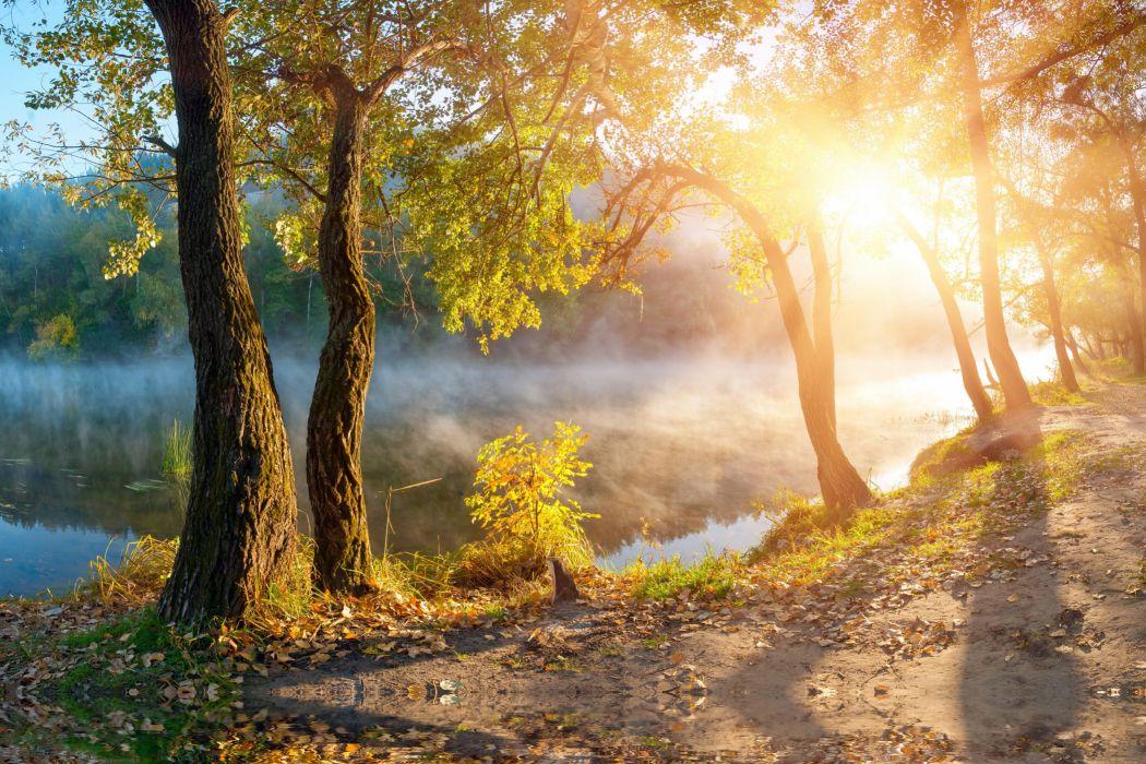 leaves landscape beautiful nature sunbeams sunlight autumn trees fog mist sunrise mood wallpaper