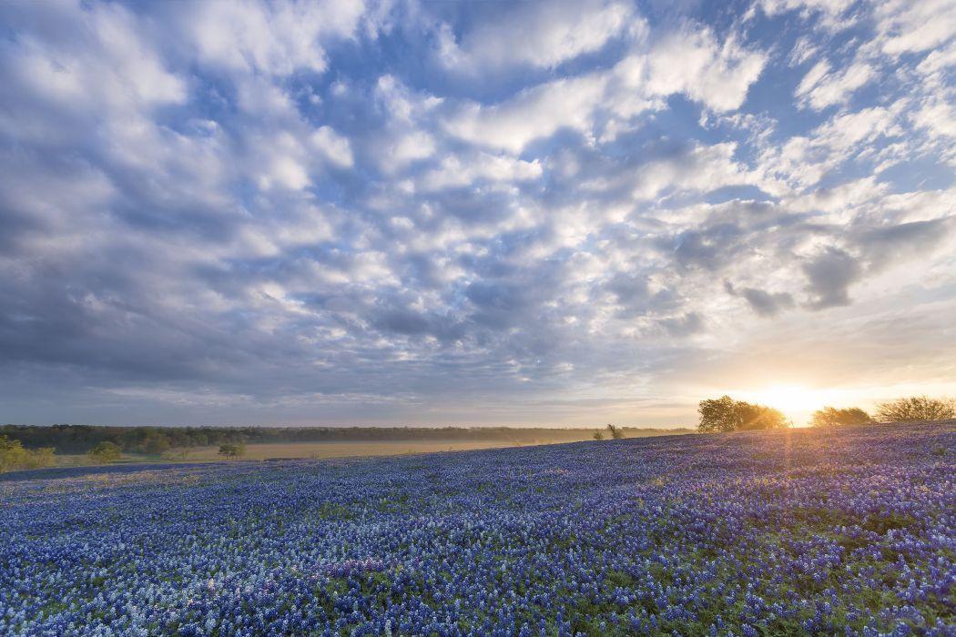 Bluebonnet Sunrise Ennis Texas flowers field wallpaper