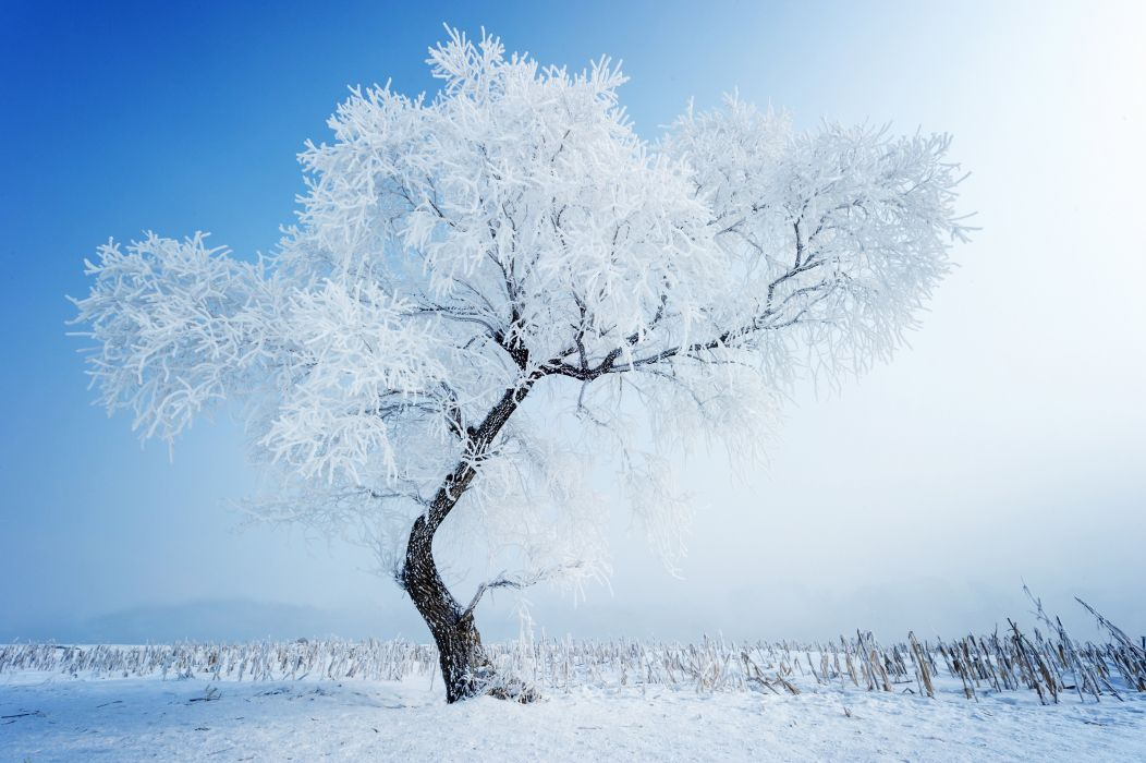 Snow tree winter nature wallpaper | 5600x3726 | 433502 ...