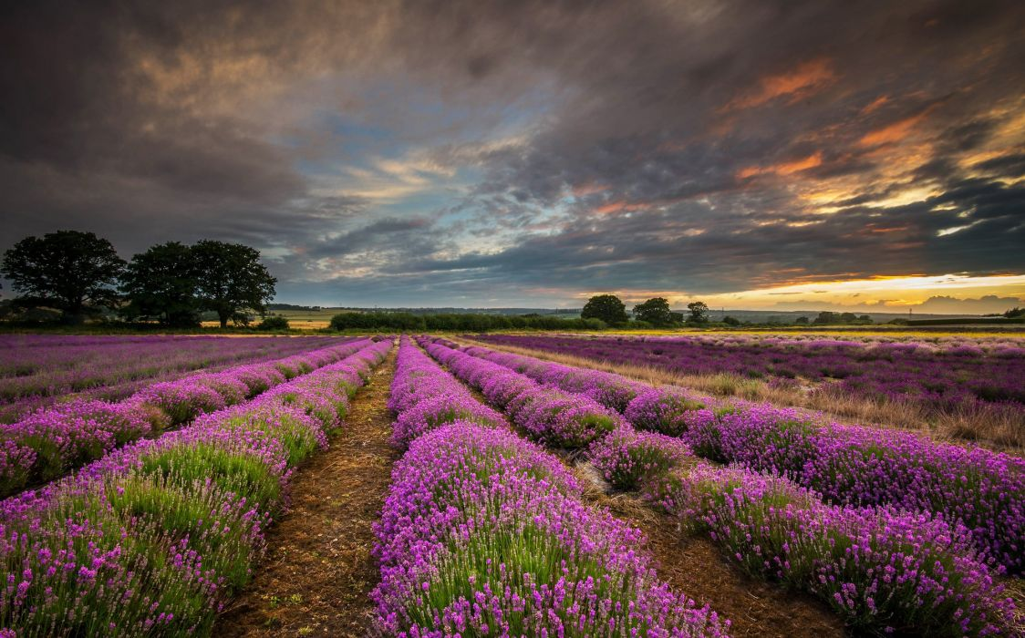 United Kingdom England hdr field flowers lavender purple sunset clouds sky wallpaper