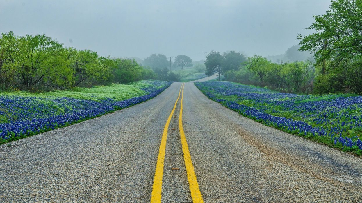 Texas Hill road trees fog landscape wallpaper