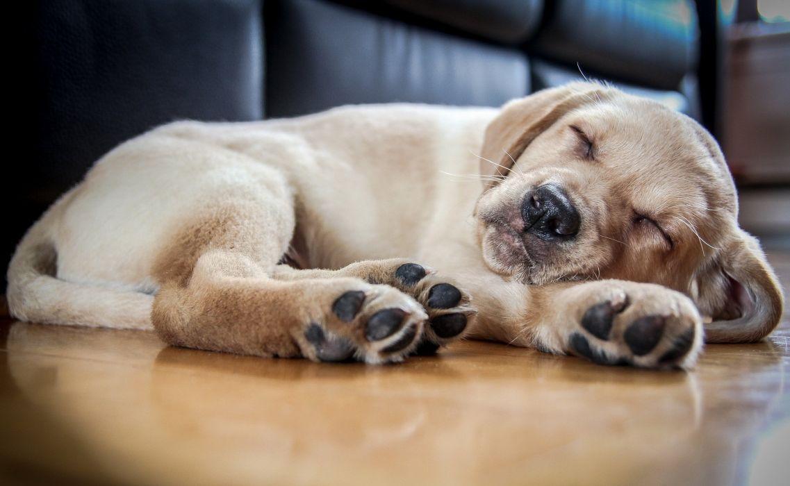 dog friend puppy wallpaper