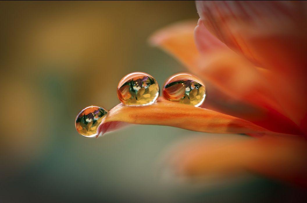 Flower petals drops background macro bokeh wallpaper