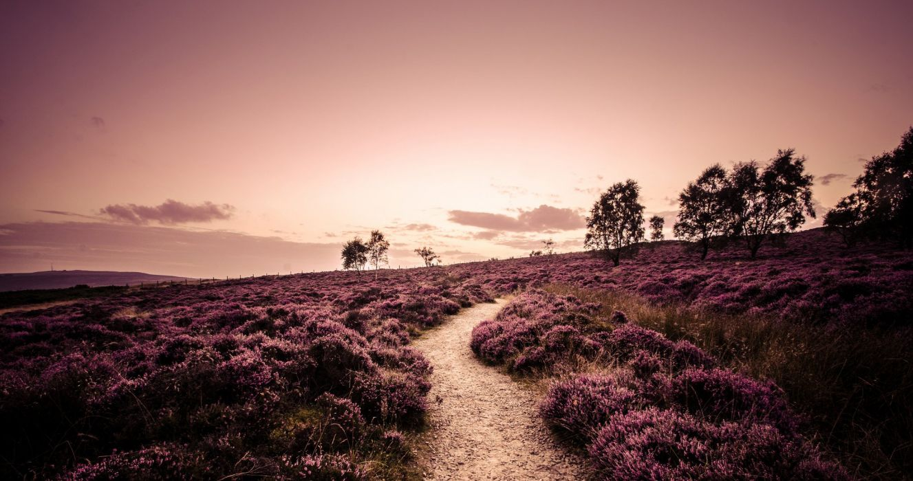 England field heather plants trees road footpath nature landscape evening path trail wallpaper