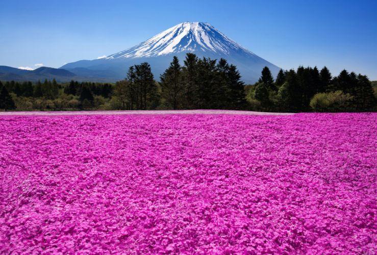 Japan Fuji volcano mountains nature flowers field meadow wallpaper