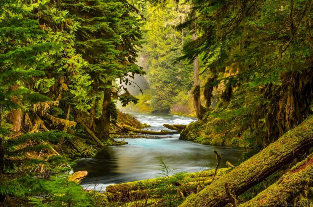McKenzie River Oregon forest river nature trees stones moss wallpaper
