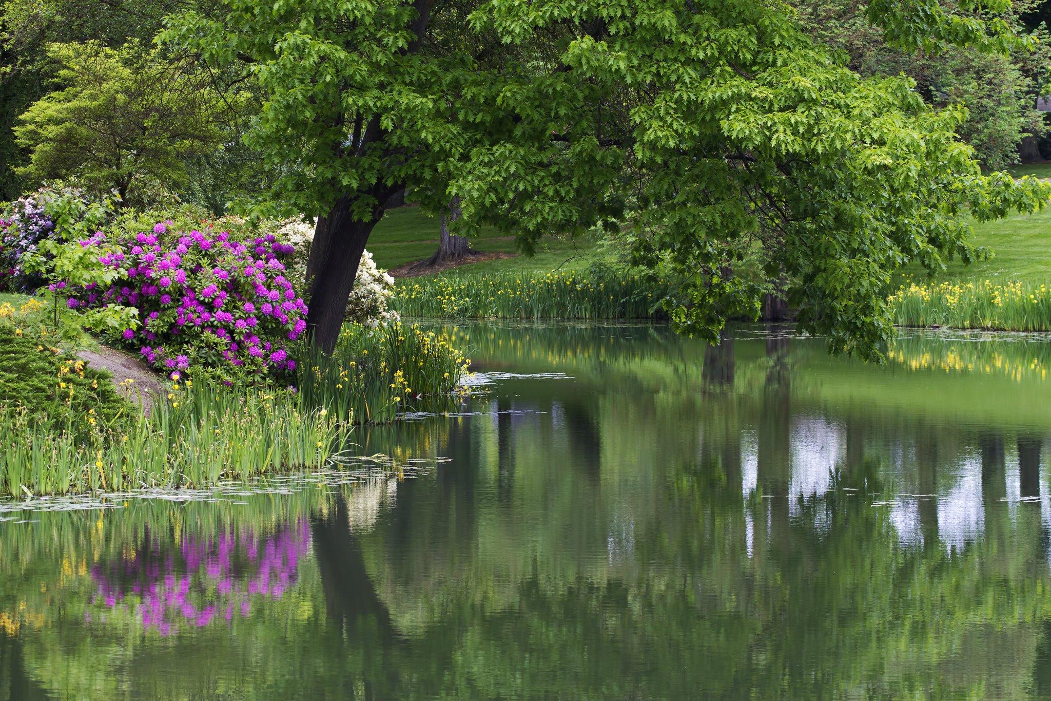 Park pond trees flowers garden lake reflection wallpaper for Flower garden ponds