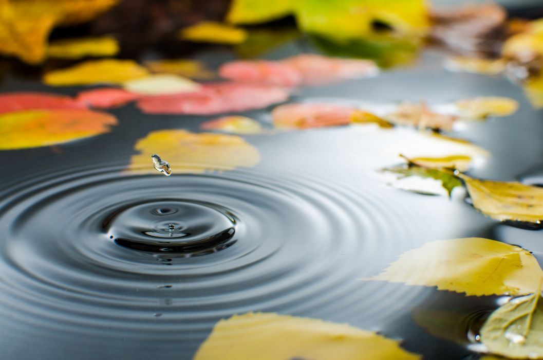 puddle water straw leaves autumn drop drops wallpaper