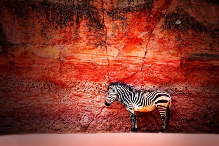Zebra wall the stone wallpaper