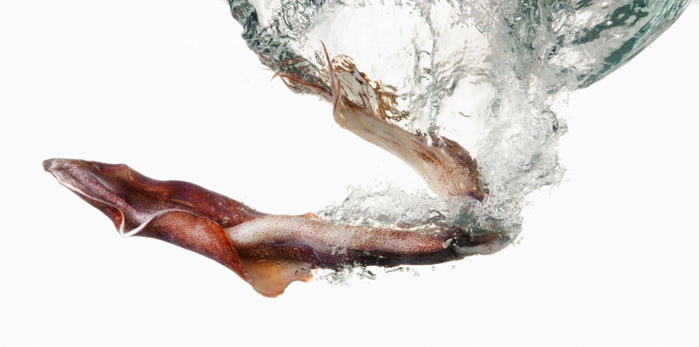 SQUID underwater ocean sea sealife wallpaper