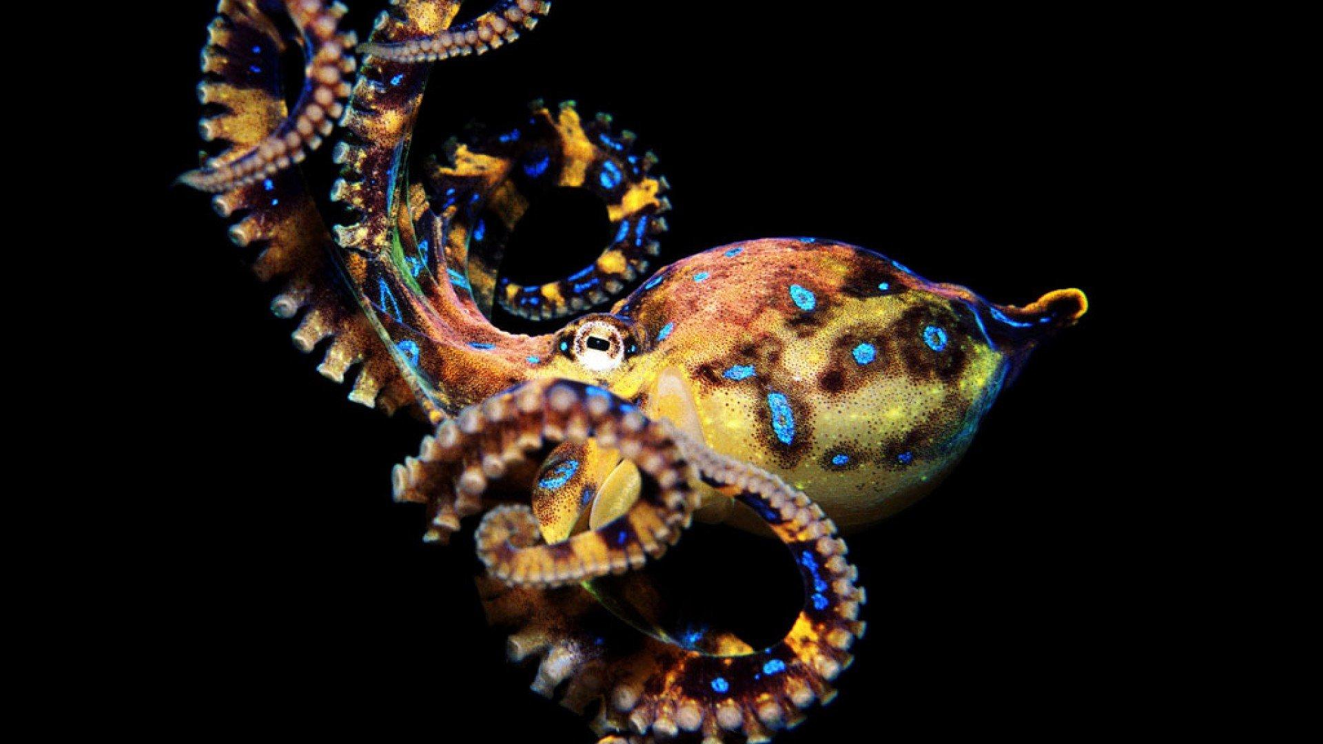 beautiful octopus wallpaper - photo #5